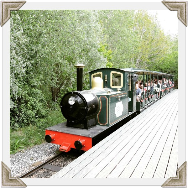 Conkers Train