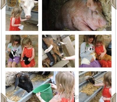Stonehurst Family Farm Animal Feeding