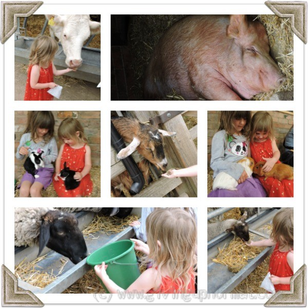 Stonehurst Family Farm Animal Feeding